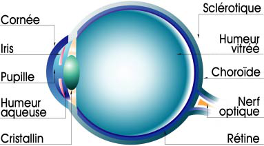 cataracte site information Anatomie oeil